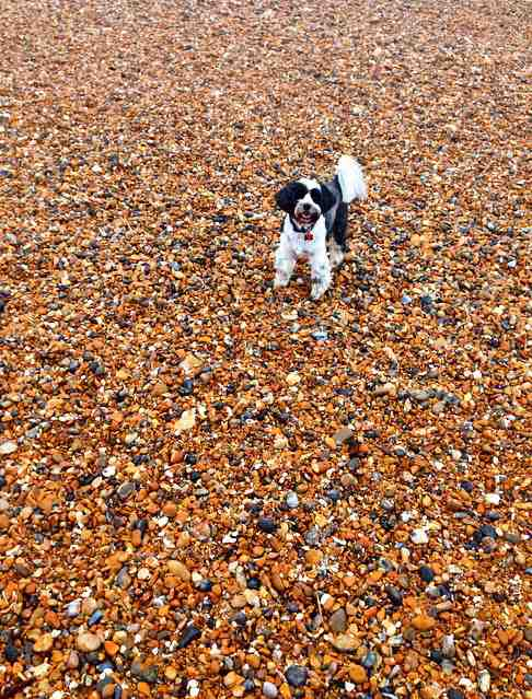 aliceboreham early mornng walkies in the beach brighton beach